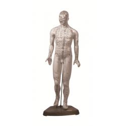 Cuerpo Humano masculino 46 cm. (puntos acupuntura)