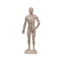 Cuerpo Humano masculino 25 cm (puntos acupuntura)